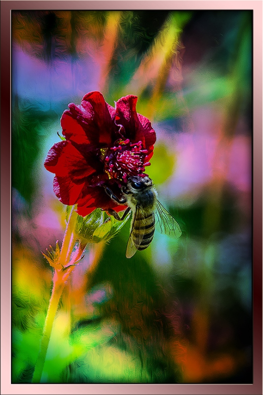 Thurber cinquefoil & bee(1 of 1)-3 blog