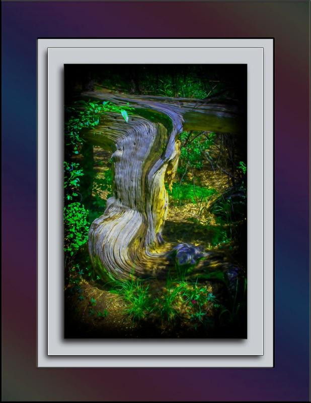 Tree art - II (1 of 1) blog