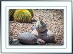 Zebra-Tailed Lizard (1 of 1)blog