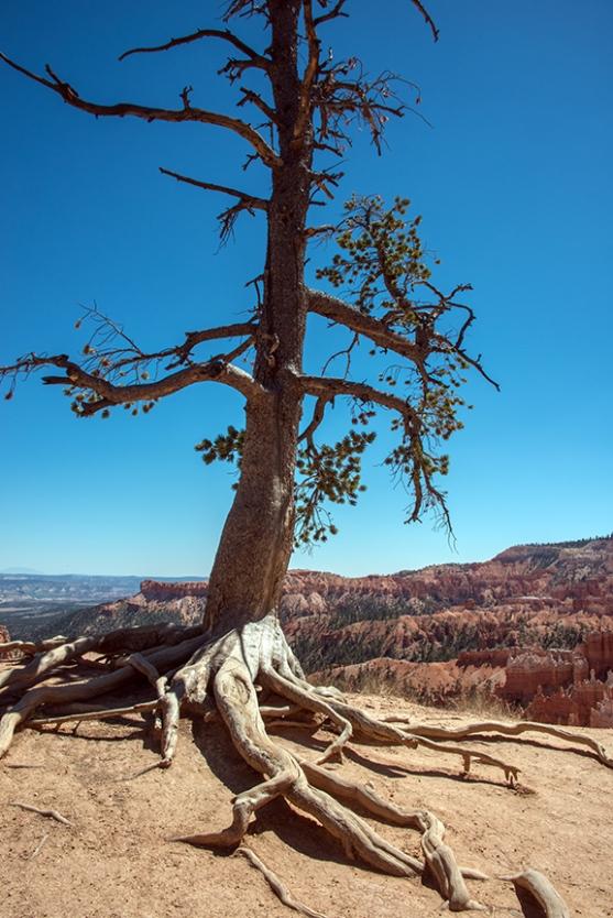 bryce-canyon-snapshots-1-of-1-10-blog