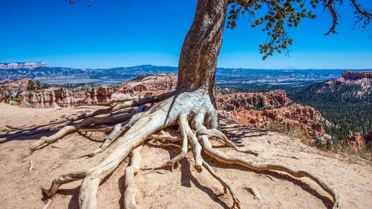 bryce-canyon-snapshots-1-of-1-11-blog