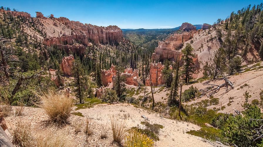 bryce-canyon-snapshots-1-of-1-13-blog