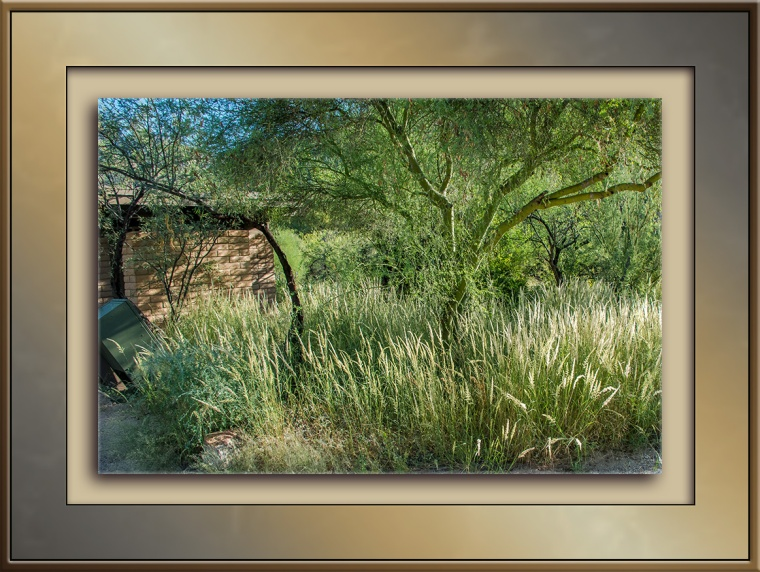 invasive-plants-1-of-1-pampas-grass-blog