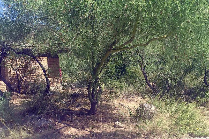 pappus-grass-after-blog