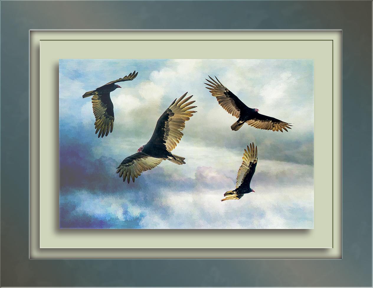 turkey-vultures-1-of-1-blog