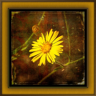 camphorweed-1-of-1-3-grunge-art-blog
