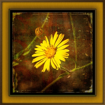 camphorweed-1-of-1-3-grunge-art-blog