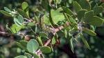 caterpillar-1-of-2-1-blog