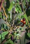 caterpillar-1-of-2-3-blog