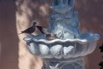 dove-in-fountain-1-of-1-4-blog