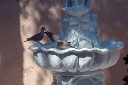 dove-in-fountain-1-of-1-4-blog
