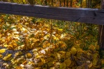 fall-colors-2016-1-of-1-3-blog
