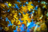 fall-colors-2016-1-of-1-5-blog