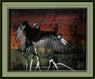 turkey-vulture-1-of-1-13-blog