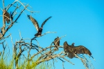 turkey-vulture-1-of-1-22-blog