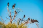 turkey-vulture-1-of-1-23-blog