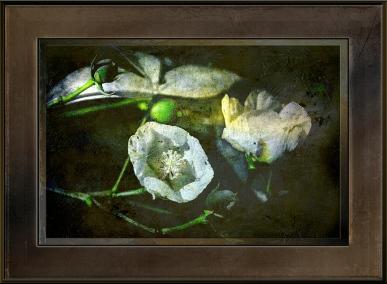 wild-cotton-1-of-1-2-art-blog-ii