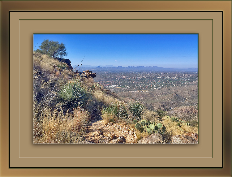 blacketts-ridge-trail-blog