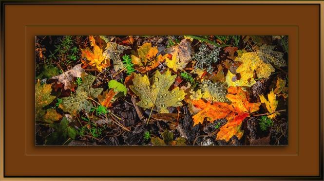 fall-leaves-1-of-1-blog