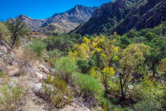 Fall Colors in Sabino Basin
