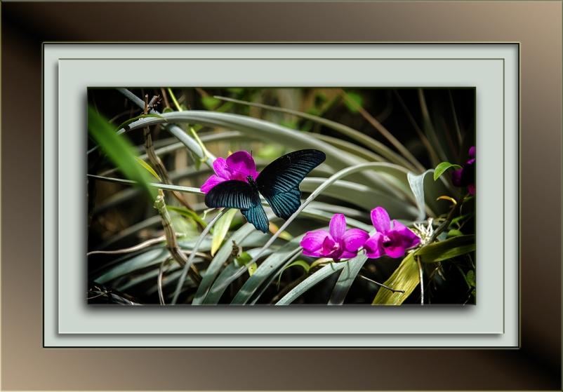 tucson-botanical-gardens-butterfly-1-of-1-4-blog
