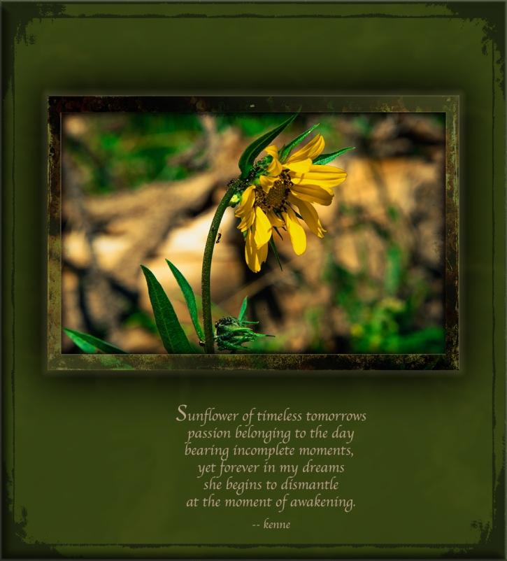 aspen-sunflower-7715-art-poem