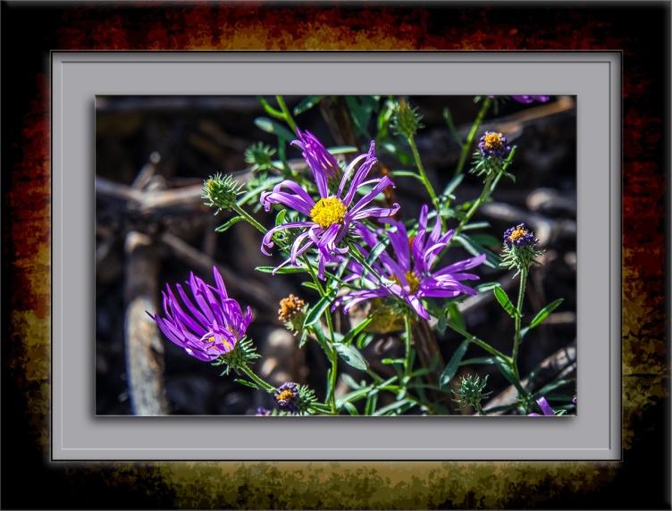 aster-wildflower-0151-blog
