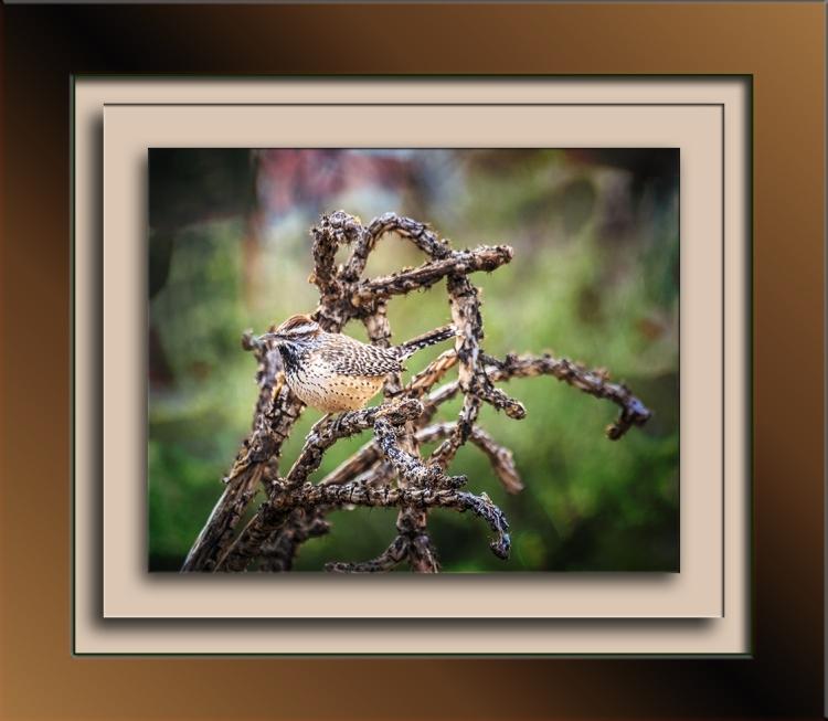 cactus-wren-0298-art-blog