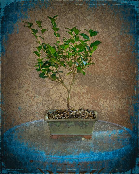 camellia-1-of-1-art-blog