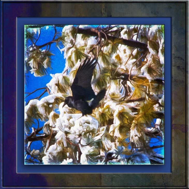 december-snow-2011-raven-1-of-1-art-blog