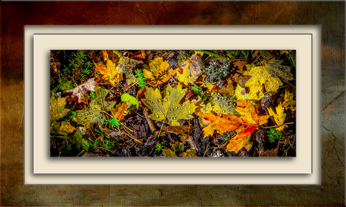 fall-leaves-blog
