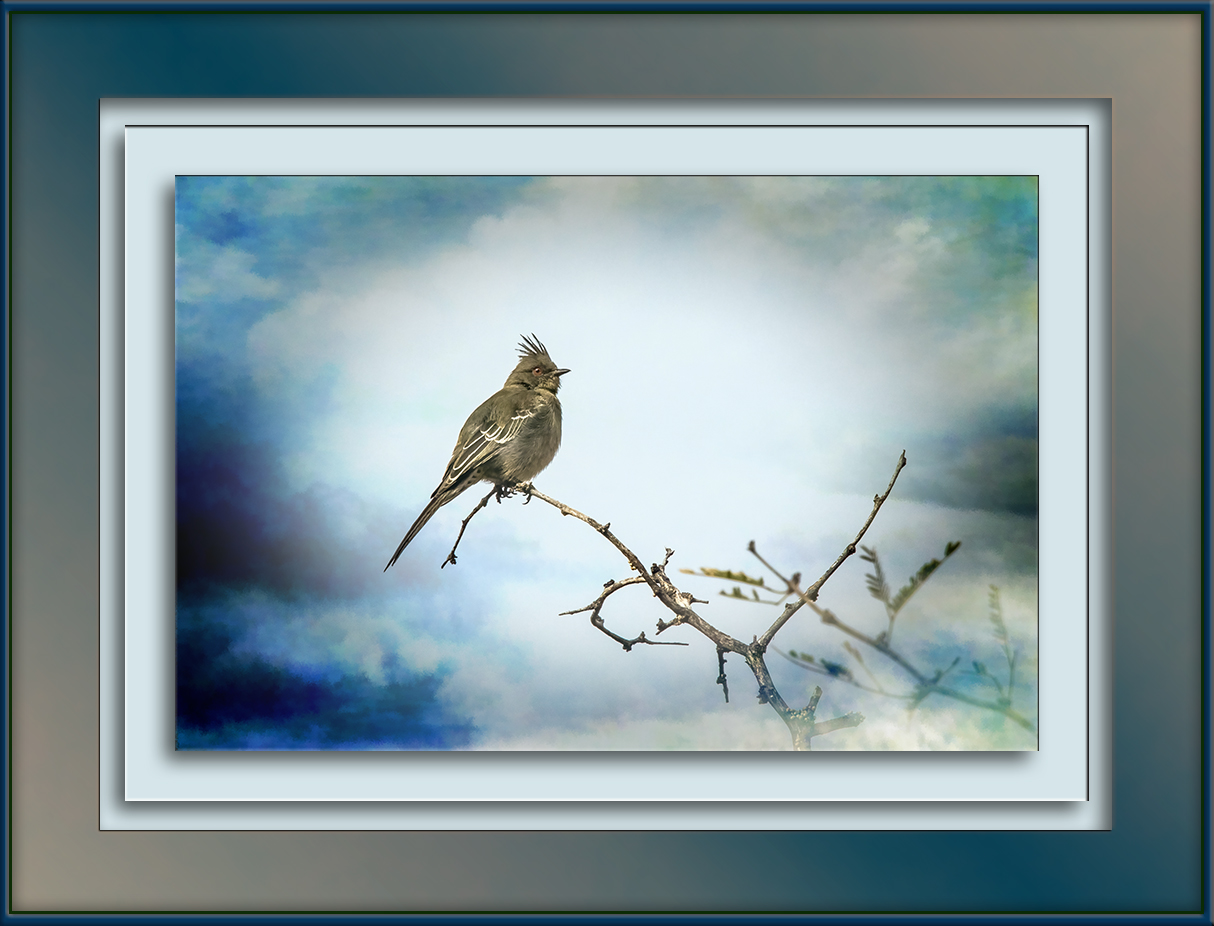 female-phainopepla-0296-art-blog