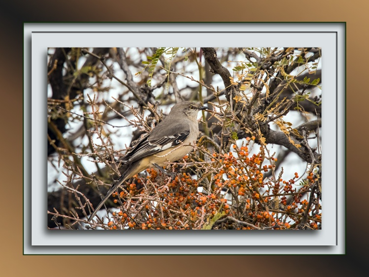 mockingbird-0288-blog