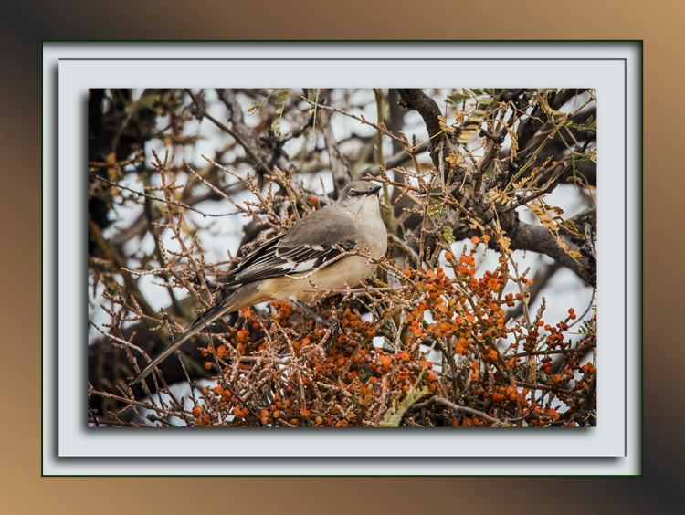 mockingbird-0289-blog