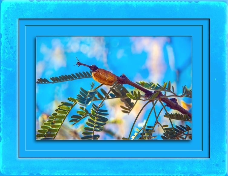 Praying Mantis egg casing (1 of 1) blog II.jpg
