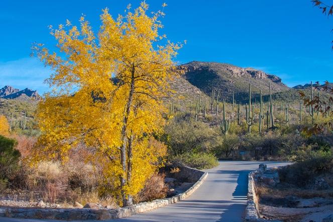 sabino-fall-colors-0139-1-blog
