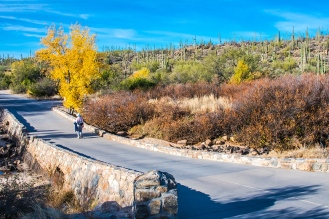 sabino-fall-colors-0143-blog
