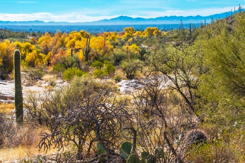 sabino-fall-colors-0175-blog