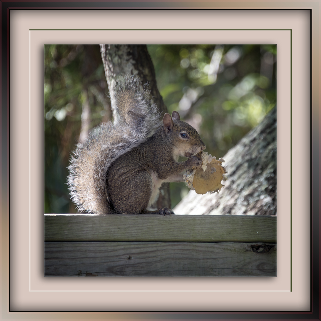 squirrel-on-park-bench-october-2013-8458-blog