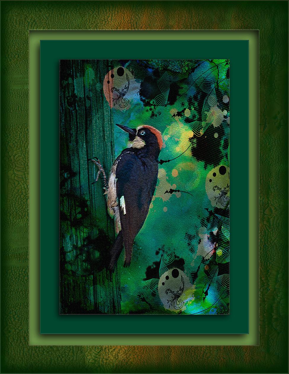 acorn-woodpecker-dreams-301-art-blog