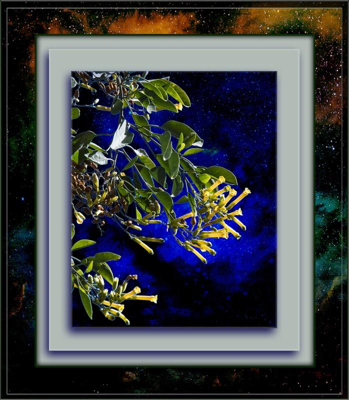 tobacco-tree-blossoms-0488-blog