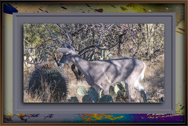 whitetail-deer-0025-blog