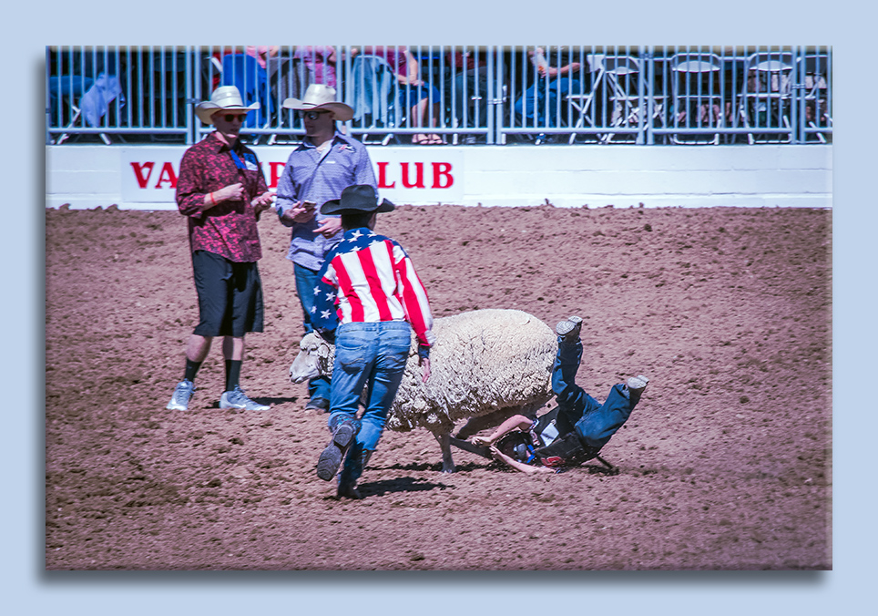 rodeo-2017-0697-ram-mutton-bustin-blog
