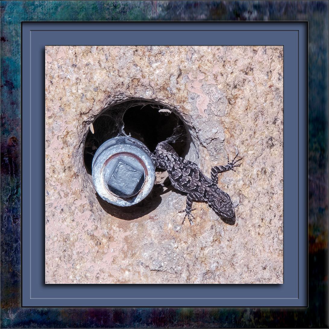 tree-lizard-sunning-0653-blog
