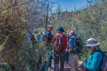 ventana-canyon-hike-0693-blog
