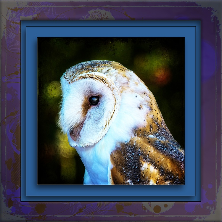 Barn Owl-0996 Art blog