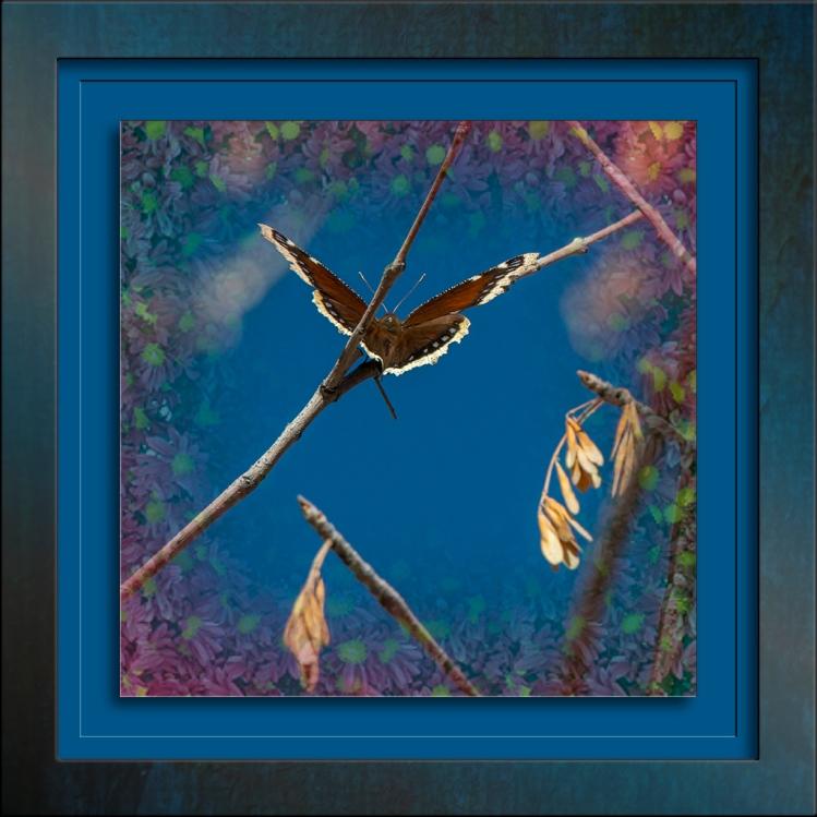 Ned's Nature walk 01-29-14-9743 Butterfly Heaven Art blog