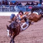 rodeo-2017-0730-blog
