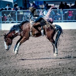 rodeo-2017-0738-blog