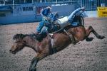 rodeo-2017-0741-blog